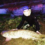 Siluri in Arno ecco dove pescarli: Montelupo Fiorentino