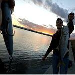 SeaSpin PRO-Q 120 per questo pesce serra