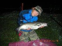 Pesce Gatto Americano da 5,5 kg
