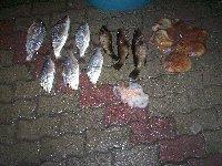 Bella pescata a largo di San Saba