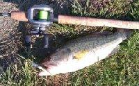 Primo Bass in lago romano