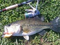 Black bass sul lago di Bolsena con Rapala