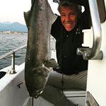 Traina - Pesca a Viareggio con serra di oltre 10kg con grongo come esca