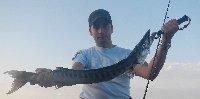 Barracuda di oltre 2kg con mare mosso