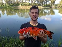 Carpa Koi di 3kg al lago Manzolini