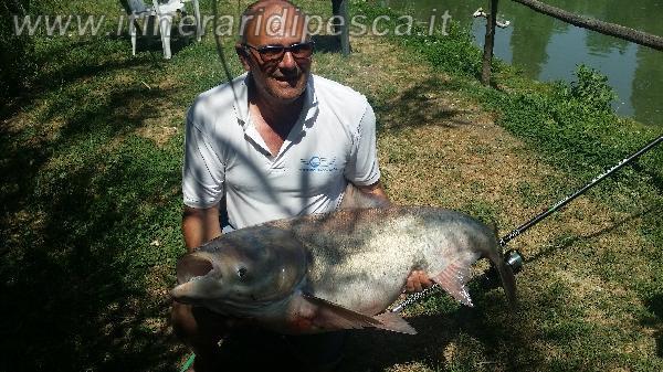 Come si pesca un temolo russo di 28kg e cosa mangia - Cosa mangia un cucciolo di talpa ...