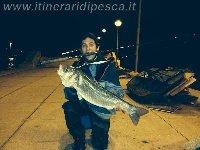 Fiumicino canale - Spigola di 5kg con Buginu 140