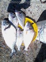 Pesca nel canale di Cagliari con il granchio di sabbia